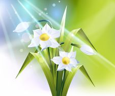 Free Spring Flower Background Stock Images - 9005314