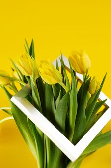 Free Bunch Of Yellow Tulip Flowers Stock Photo - 9006040