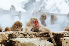 Free Close-up Of Monkey On Snow Royalty Free Stock Photography - 90037447