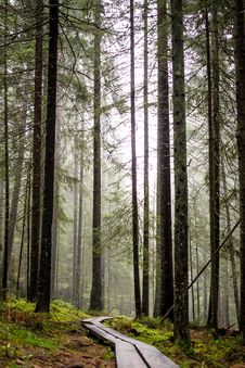 Free Photo Of Forest Over Viewing Fog Stock Photo - 90097440