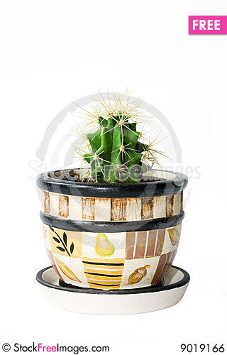Free Cactus Royalty Free Stock Image - 9019166