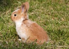 Free Bunny Stock Images - 9011294