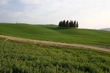 Free Tuscany Landscape Royalty Free Stock Images - 9011319
