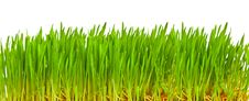 Free Green Grass Isolated Royalty Free Stock Image - 9013666
