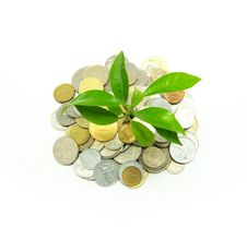 Free Plant In Coins Stock Photo - 9014490