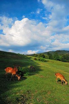Free Grazing Deer Stock Image - 9015241