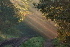 Free Forest With Sunrays Stock Image - 9016641