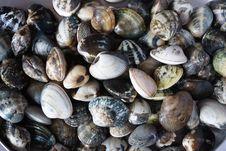 Free Shells Royalty Free Stock Photo - 9017605