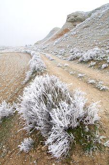 Free Frosty Landscape Stock Photo - 9018480