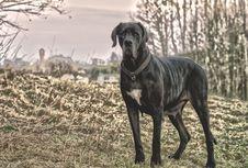 Free Old Dog Looking At Camera Royalty Free Stock Photo - 90101675