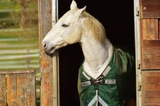 Free Horse, Halter, Bridle, Horse Tack Royalty Free Stock Photography - 90102287