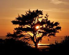 Free Tree At Sunset Royalty Free Stock Photo - 90155345