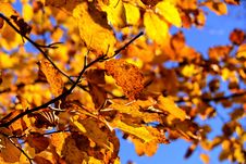 Free Leaf, Branch, Autumn, Yellow Royalty Free Stock Photo - 90157155