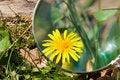 Free Botanical Study Royalty Free Stock Photos - 9022888