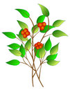 Free Tree Branch With Berries Stock Images - 9027104