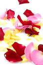 Free Red, Pink And Yellow Rose Paddles Royalty Free Stock Photography - 9028557