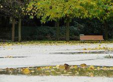 Free Rainy Day In Public Park Royalty Free Stock Photos - 9020858