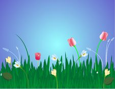 Free Blossoms In The Grass Illustration Royalty Free Stock Photo - 9020915