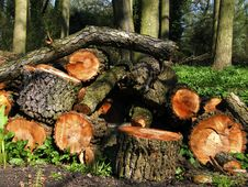 Free Logs In Woodland Royalty Free Stock Image - 9021896