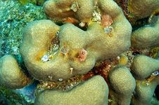 Free Christmas Tree Worms And Coral Stock Image - 9024501