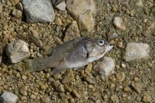 Free Dead Fish Stock Images - 9026064
