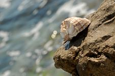Free Sea Shell Royalty Free Stock Photos - 9026738