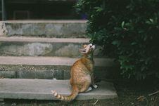Free Orange Tabby Cat On Grey Concrete Steps Royalty Free Stock Photos - 90213068