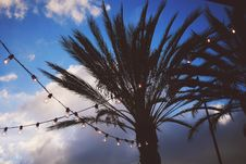 Free Silhouette Of Tree Under Gray Clouds And White Sky During Daytime Royalty Free Stock Photos - 90279008