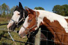 Free Horses In Paddock Stock Image - 90279331