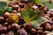 Free Close-up Of Fruits On Field During Autumn Stock Images - 90279424