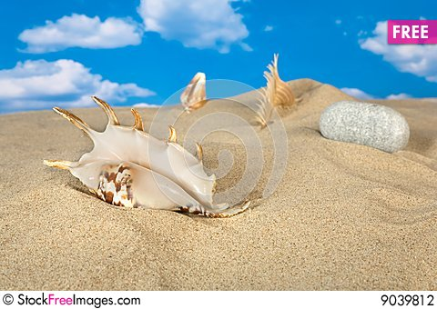Free Landscape With Seashell And Stones On Sky Stock Photography - 9039812