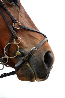 Free Bridle Stock Images - 9030174