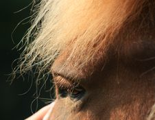 Free Portrait Of A Horse Stock Images - 9030304