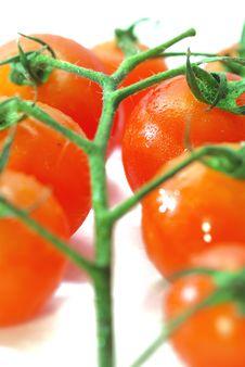 Free Red Tomato Series 1 Royalty Free Stock Image - 9030446