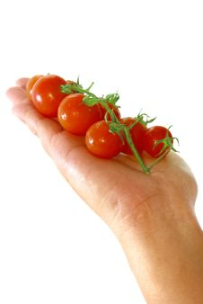 Free Red Tomato Series 2 Royalty Free Stock Images - 9030489