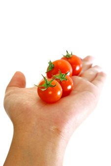 Free Red Tomato Series 2 Royalty Free Stock Images - 9030629