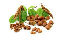 Free Hazelnuts Stock Images - 9030804