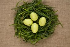 Free Grass Nest With Eggs Stock Photography - 9031062
