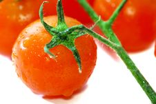 Free Red Tomato Stock Photography - 9031942