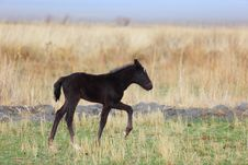 Free Black Foal Stock Photography - 9032472