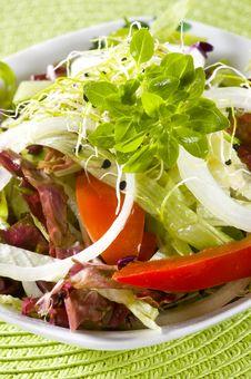 Free Salad Stock Photo - 9033300