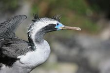 Free Bird Stock Photography - 9033562