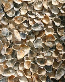 Free Shells Stock Image - 9033881