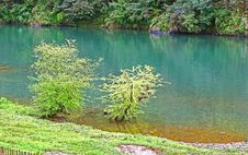 Free Trees By Water Royalty Free Stock Images - 9034889