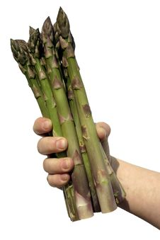 Free Hand Of Asparagus Royalty Free Stock Photo - 9034925