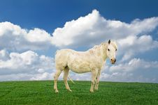 Free White Pony. Royalty Free Stock Image - 9035886