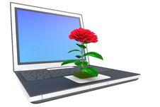 Free Flower On Laptop Stock Photos - 9036093