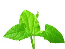 Free Young Plant Royalty Free Stock Image - 9036106