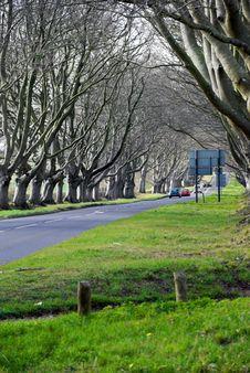 Free Avenue Of Trees Stock Photos - 9036233
