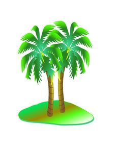 Free Palm Tree Stock Photos - 9036253